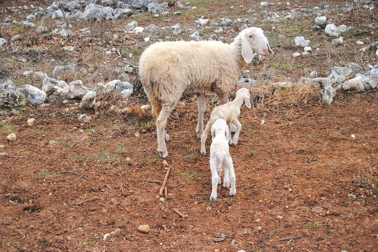 azienda-agnelli