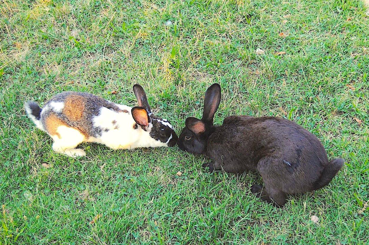 azienda-conigli